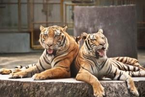 Alex MP criticises Government over delays in ban on circus animals
