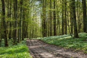 Tories in Fresh U-Turn over Sale of Forests
